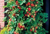 Fruit/Herb/Vegetable Garden