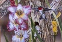 Humming by a humming bird