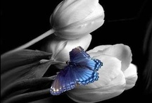 Butterflies are free!