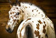 paarden / by Helena