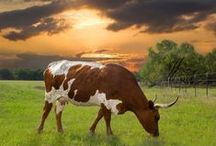 Terrific Texas / We think Texas is terrific! Come visit and enjoy our friendly nature!