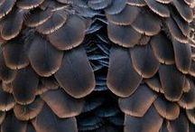 REF: Animals Birds