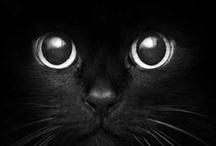 animal favorites / by Julie Atkinson