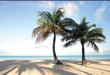 Antigua / Antigua, mare cristallino, ricco di vita, spiagge di sabbia bianca, hibiscus, orchidee, bambù giganti, palme da cocco, l'isola dalle 365 spiagge, una per ogni giorno dell'anno. Per informazioni: http://www.presstours.it/vacanze/caraibi/antigua-and-barbuda