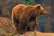 Mother bear / Inspiring images of this most awesome of creatures.
