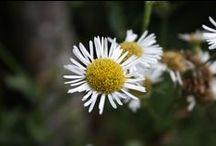 Fotografias / Fotografias de lugares, plantas, animais, etc ...