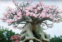 bajeczne   drzewa