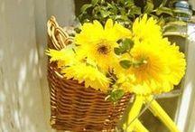żółty / kolor ten oznacza : radość - ciepło