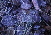 colorlove; purple