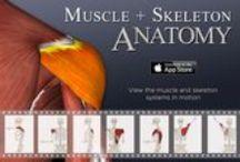 Medical Apps / Beautifully designed Medical, Health & Fitness Apps by 3D4Medical - http://www.3d4medical.com/