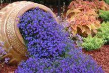Flowers / Flowers and Gardening  / by Teddy Schultz