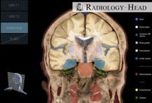 Radiology Head  / This app is a valuable learning and reference tool for radiologists, surgeons, medical students and nurses.