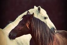 Cavalo - Fotografia