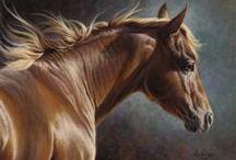 Cavalo - Alazão