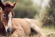 Cavalo - Potro