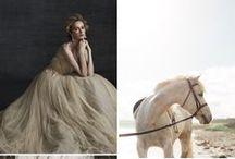 Photoshoot: horses