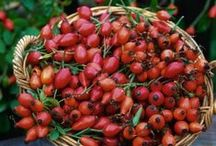 Rosehip Oil -  Afford A Wealth Of Benefits / A marvellous moisturiser with a proven ability to reduce the appearance of scarring, redness and wrinkles whilst keeping skin in radiantly youthful condition. It smoothes the complexion and works within the skin to promote healthy re-growth, elasticity and tone. It also helps to counteract the appearance of sun spots and the damaging effects of UV light. A great all-round performer, it is sustainably produced by organic farmers in Chile.
