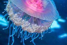 !Underwater!