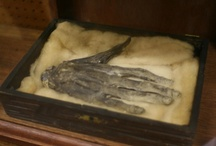 """hand of glory / The Hand of Glory is the dried and pickled hand of a man who has been hanged, often the left (sinister) hand,or if the man was hanged for murder, the hand that """"did the deed"""". According to legend, a candle made of the fat of the hanged man, lighted and placed in the Hand of Glory renders people motionless and has the power to unlock any door. It is also known as a """"Thiefs' Candle"""". / by mary johnson"""