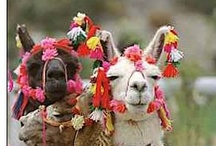 Hispanic Country Pics / by R-P Spanish