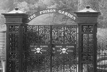 """poison garden / """"Behind the walls of my apothecary garden are other rare and even more dangerous plants. Many I acquired without fully understanding their uses- perhaps I found a name mentioned in some obscure, ancient medical text, or came upon a cure related by a beggar who claimed to have heard it from an ancient witch woman he met once....I have bought and traded plants from all over the world. The most powerful live behind that locked gate."""" The Poison Diaries"""