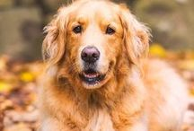 Dog Photography / Awesome dog photographs and dog photography tips to help get better picks of man's best friend!