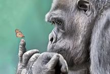 The beauty of animals