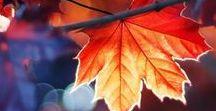A U T U M N / All things Autumn