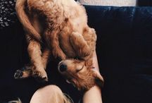 Puppies make me Smile / Irresistible animals / by Melissa Bravo