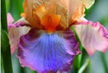 Flowers for the Garden / by Suzy Schettler