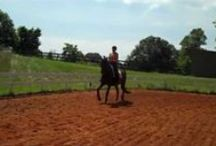 Susan and Darrien's Training progress.  Horse and Rider Awareness / Now you can watch the training process of an FEI dressage horse.  Darrien is Susan's new horse.  He is  17 years old and Susan is competing him in Prix St George and Intermediate 1.