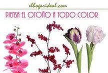 elhogarideal autumn-winter 2014 / Campaña otoño-invierno 2014
