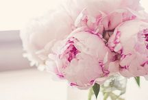 Le fleurs du mal
