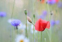 bloemen en planten / tips en ideeën,  maar ook allerlei andere dingen,  gewoon omdat ik van bloemen en planten hou
