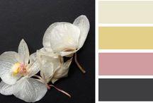 Kleuren & kleurcombinaties