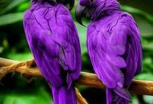 Vogels / er zijn zo veel, en allemaal verschillende,  vogels, prachtig.  ik raak niet uit-bewonderd.