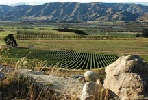 Memorable Wine / New Zealand produces amazing wine. / by Anchorage Motel Apartments, Te Anau, NZ