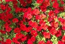 Flowers / by Shelley Hughes Kuuru