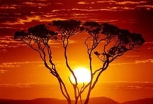 Sunrise,sunset / by Yvonne Sutton