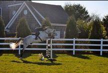 Horses / by Mina