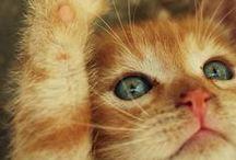 Kittens / little divas ... / by Grace L. Fleming