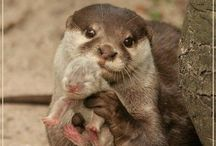 Animal Babies / Everybody loves baby animals!  / by Tina Nelson