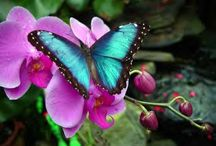 Butterflies / Truly, aren't butterflies one of the best things about this world? / by Tina Nelson
