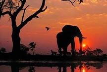 Elephants :) / by Heidy Wasson