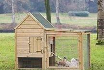 dieren verblijven / verschillende dier verblijven o.a. kippenhok, konijnenhok, hondenhok.