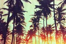 Lovin' Summer the Malibu way / Everything that looks, smells, talks, walks and thinks like summer.