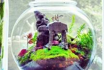 Life's a Bowl of ... Planties / Terrariums, Aquascapes & Cloches