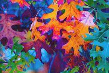 scraps / mixed media: color & form