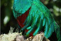 Loros, quetzal y otros / Variedad de pajaros:loros, colibríes , guacamayas, quetzal, y más