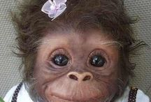 Bichitos peludos / Monos y mas